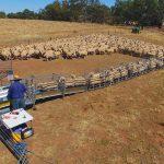 farm panels sheep yard options