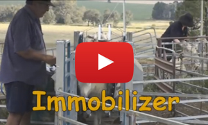 Sheep automatic clamp machine