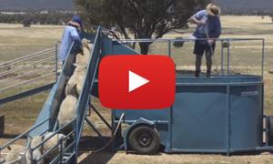 Mobile sheep dip