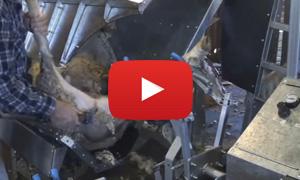 Shearing sheep table upright