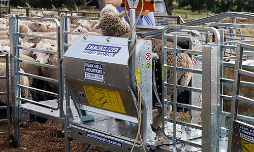Sheep clamping machine automatic