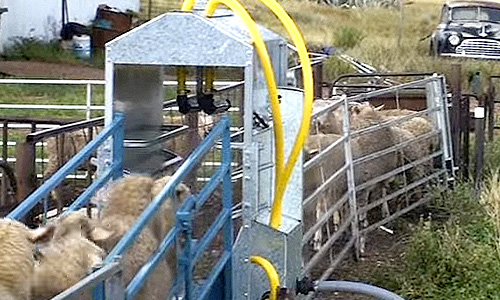 Automatic sheep jetting lice
