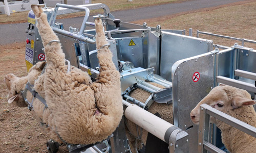 Sheep rotating handler