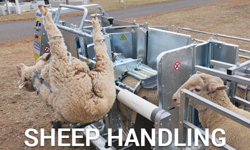 Sheep handling machines
