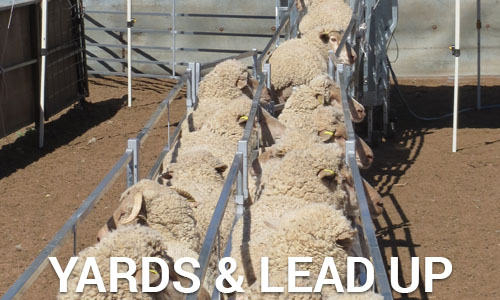 Sheep yards leadup